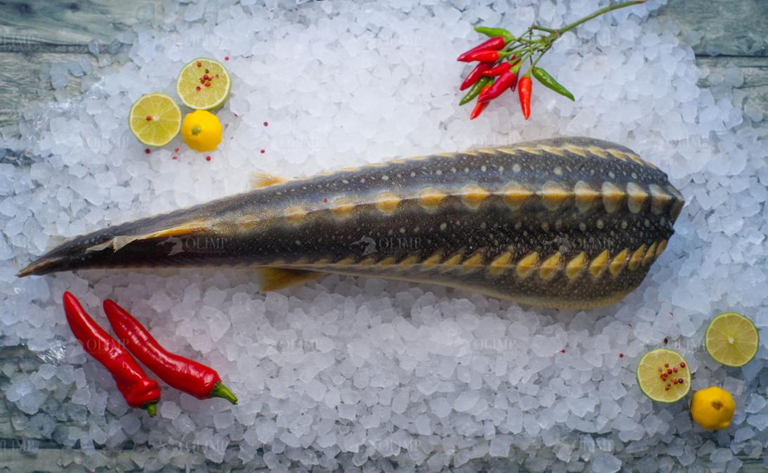 Осетрина: особенность и польза рыбы
