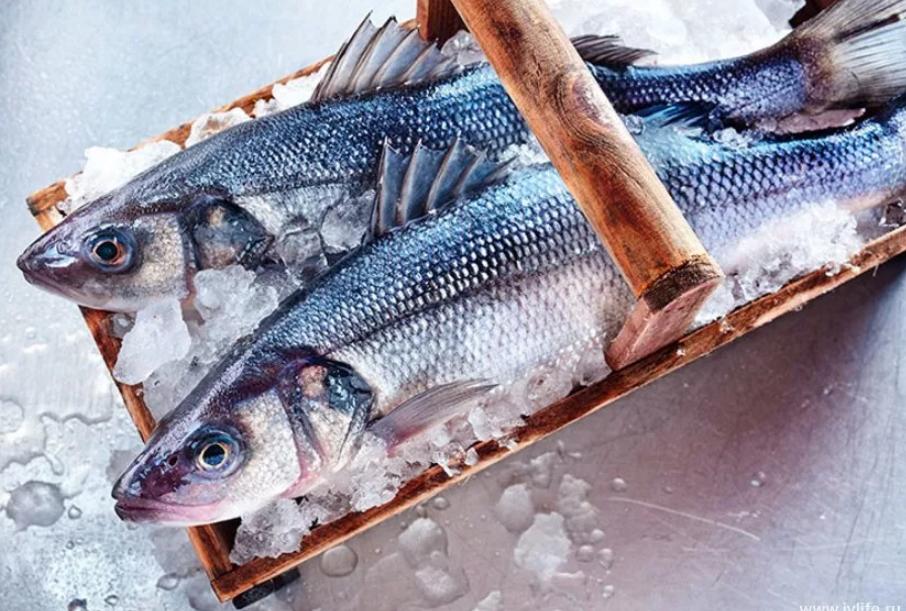 Заморозка: основные правила хранения рыбы